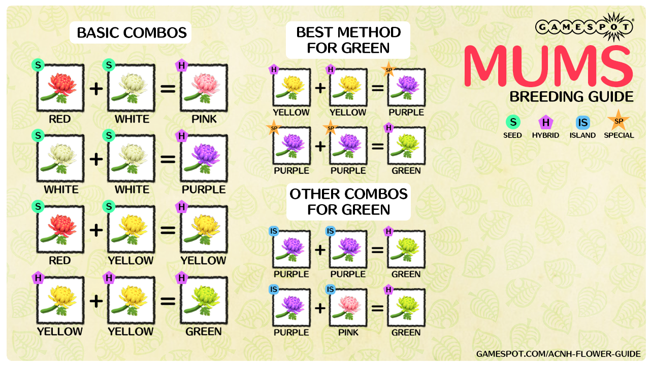 A chart showing how to breed every color of mums in New Horizons.