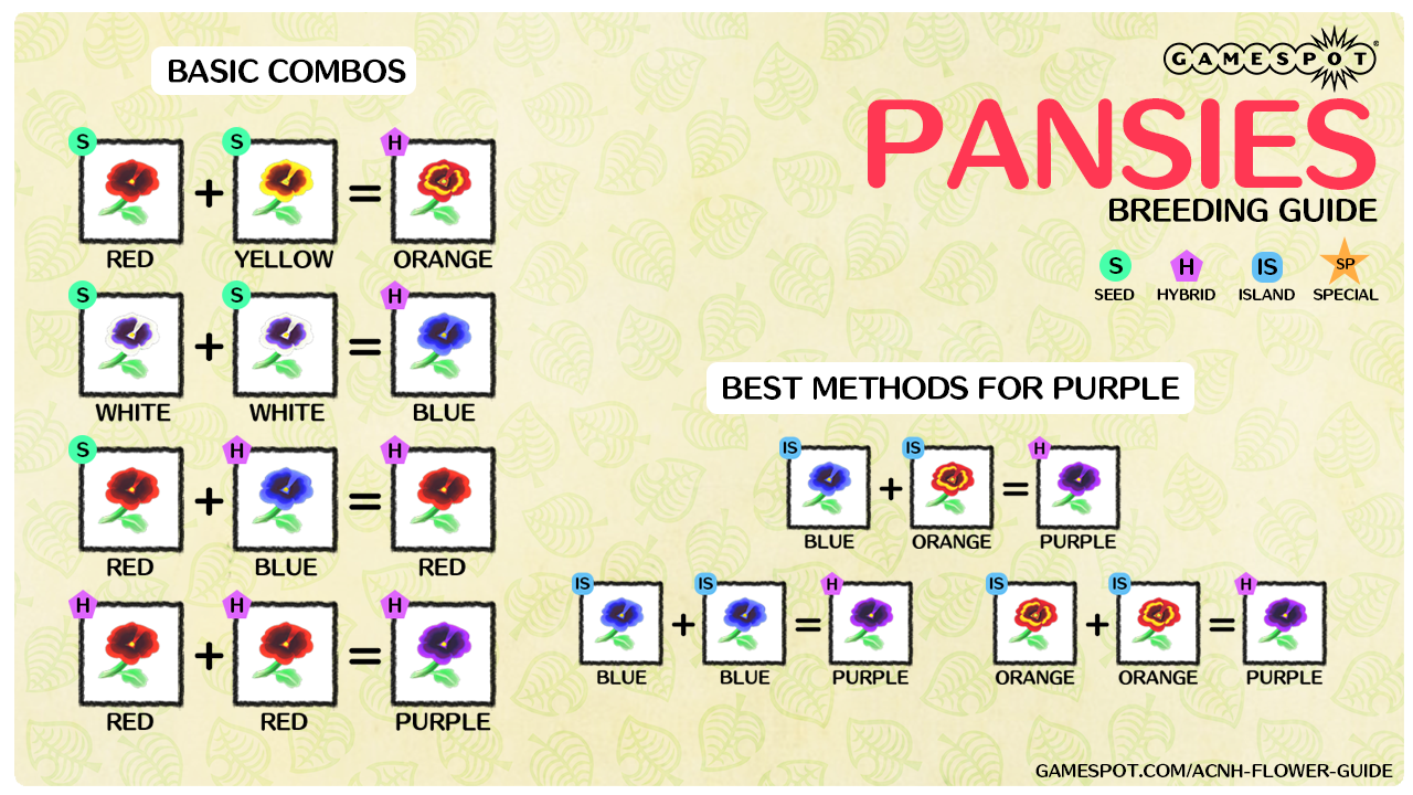 A chart showing how to breed every color of pansies in New Horizons.