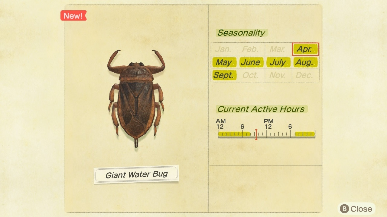The culprit: a giant water bug.