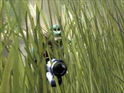 This grass effect really shows off Brute Force's impressive graphics.