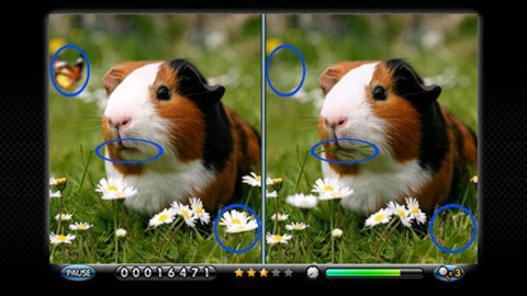 Spot the differences between Guinea pigs.