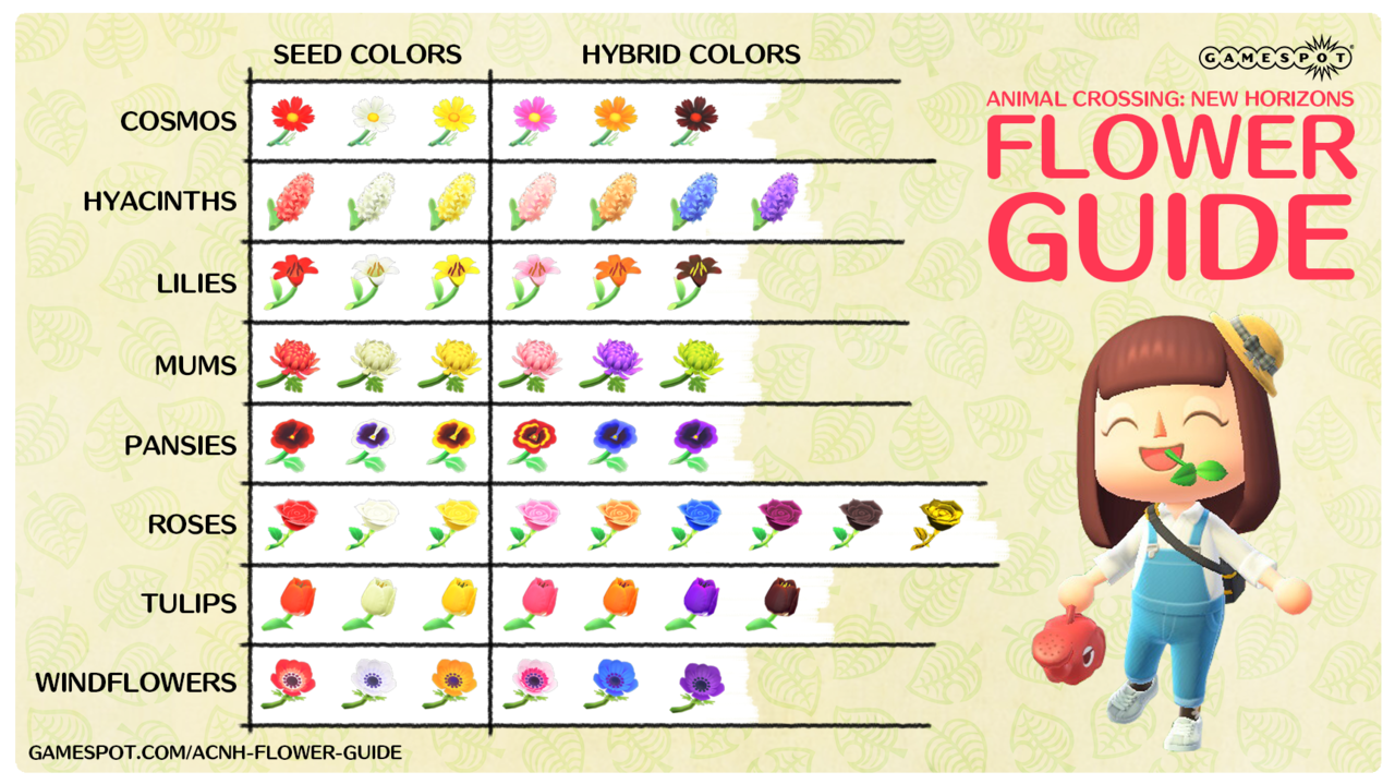 A chart showing all the flower species in Animal Crossing: New Horizons and every color available for each. Click in to enlarge.