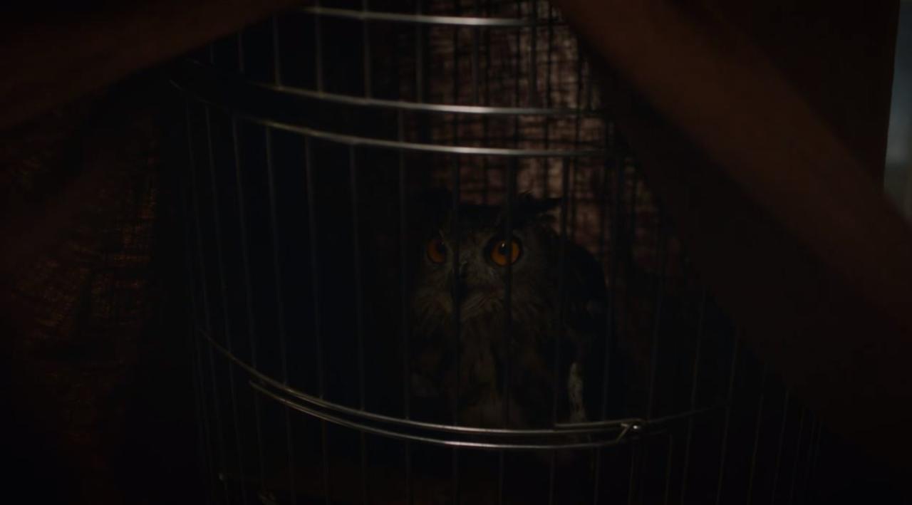 7. Pet Owl
