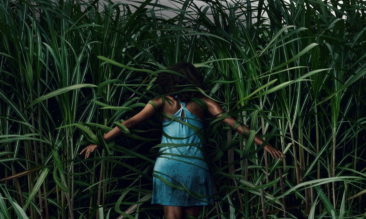 3. In The Tall Grass (Netflix)