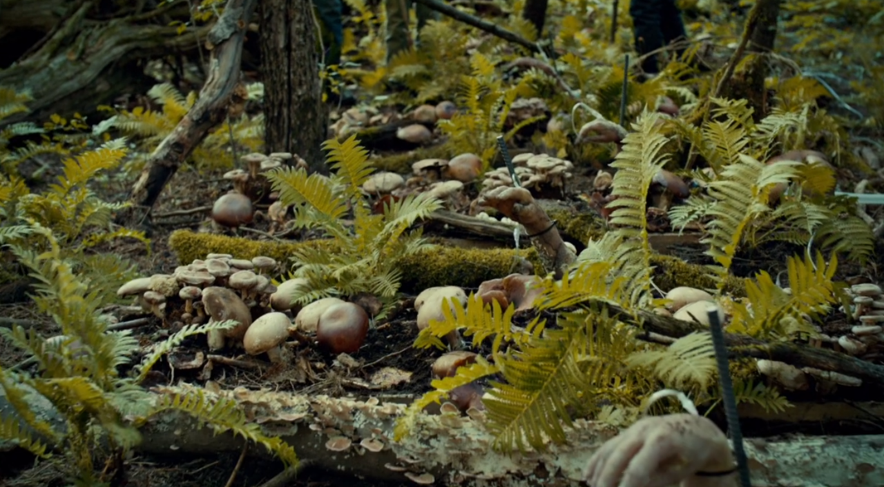 1. Mushroom Garden