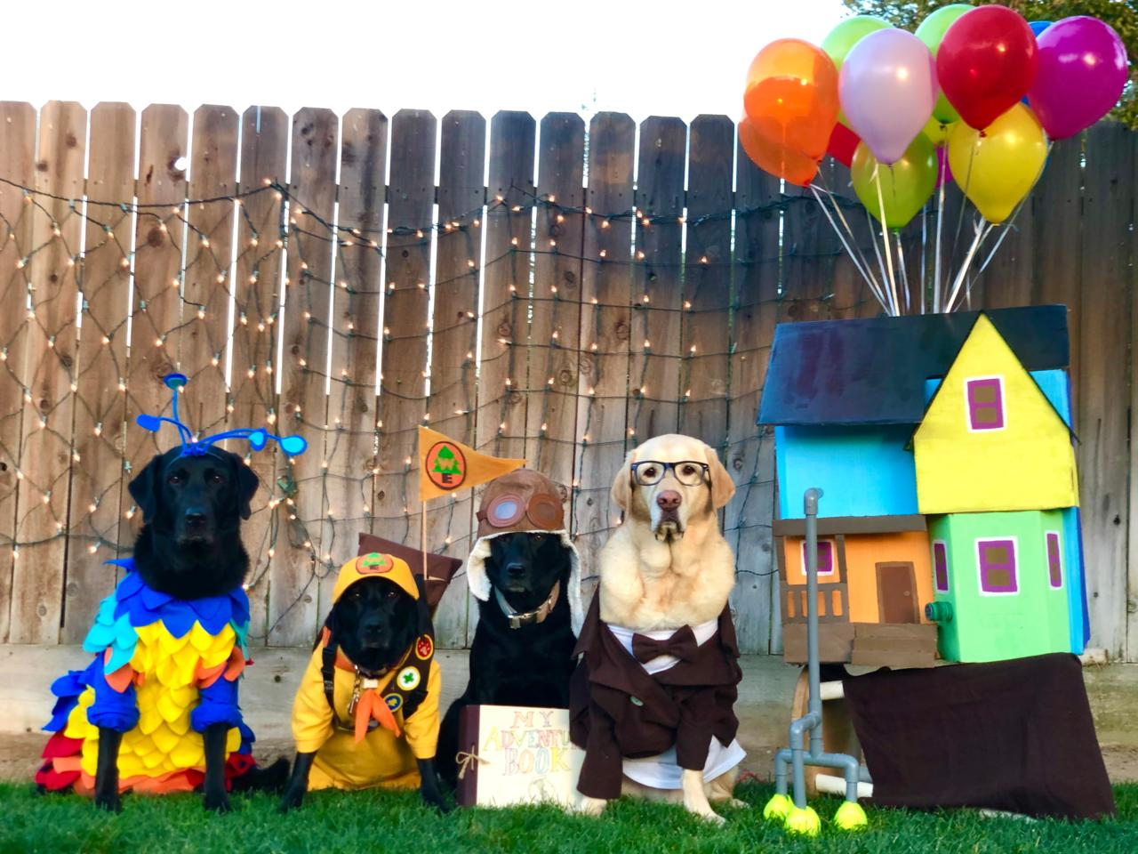 Honorary mention to Kevin (Shep), Russell (Waffle), Ellie (Filly), and Mr. Fredricksen (Schroeder) for their great job posing as characters from Pixar's Up. Photo submission by Meghan L.
