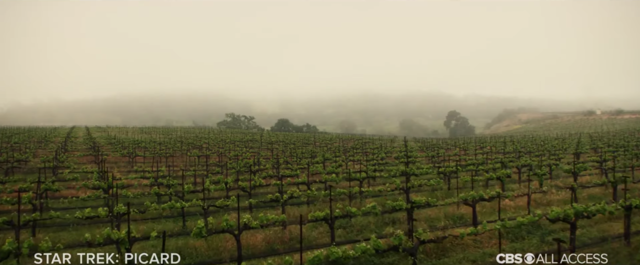 First Picard Trailer Takes Jean-Luc Out Of The Vineyard