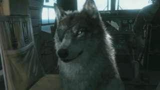 Metal Gear Solid V: The Phantom Pain - Wolf Companion Trailer